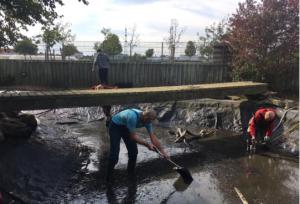 Teich im Vogelpark wird von Helfern gereinigt